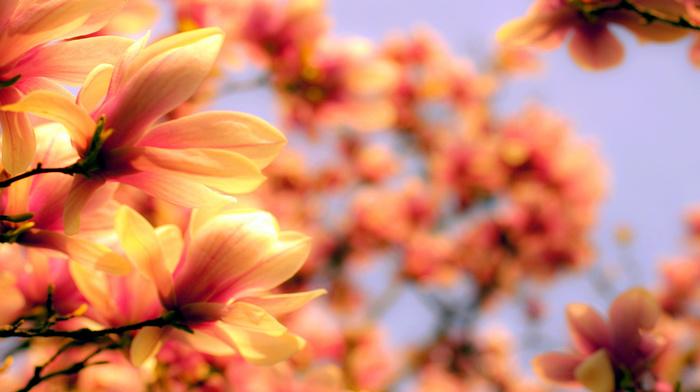 twigs, bloom, flowers, petals