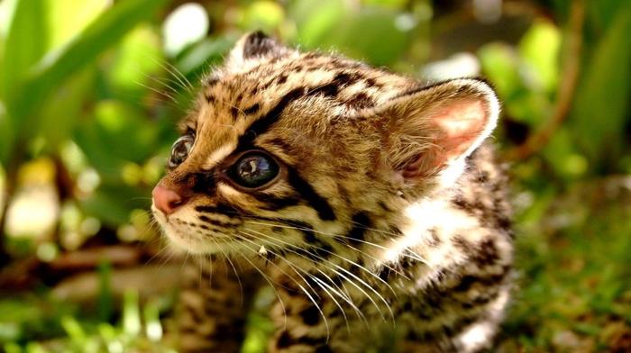 animals, kitten