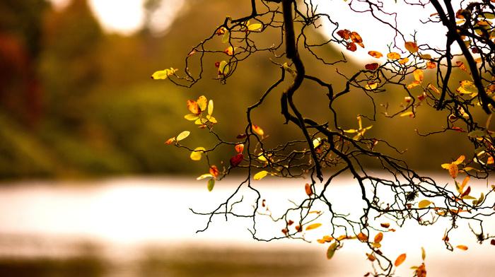branch, nature, autumn, foliage