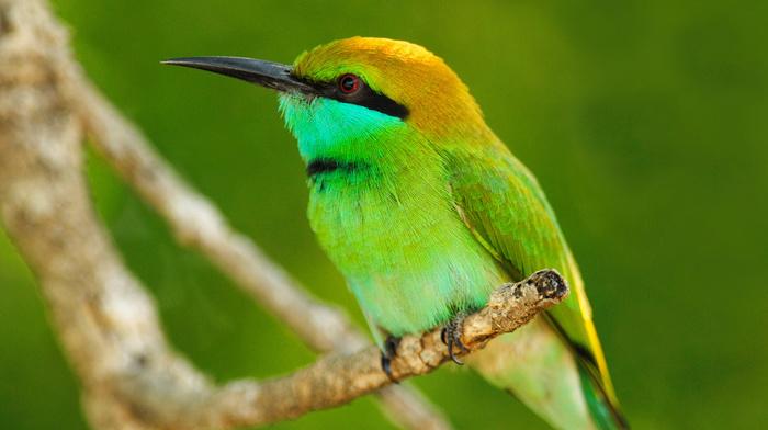 macro, animals, leaves, branch, bird