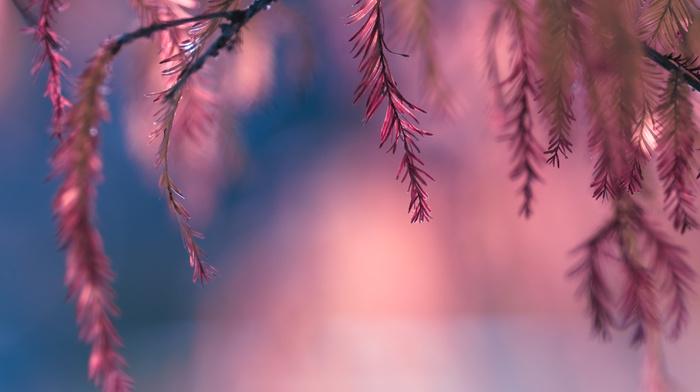 bokeh, pink, macro, leaves