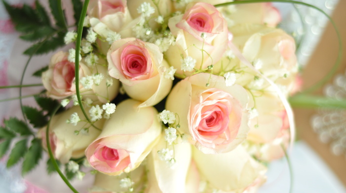 holiday, roses, flowers