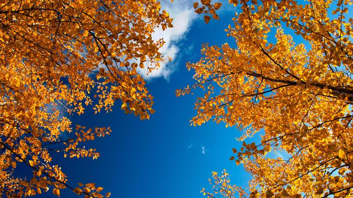 autumn, nature, sky, twigs, foliage