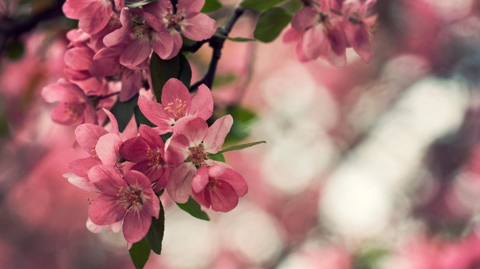 nature, leaves, bokeh, flowers, petals, plant, macro