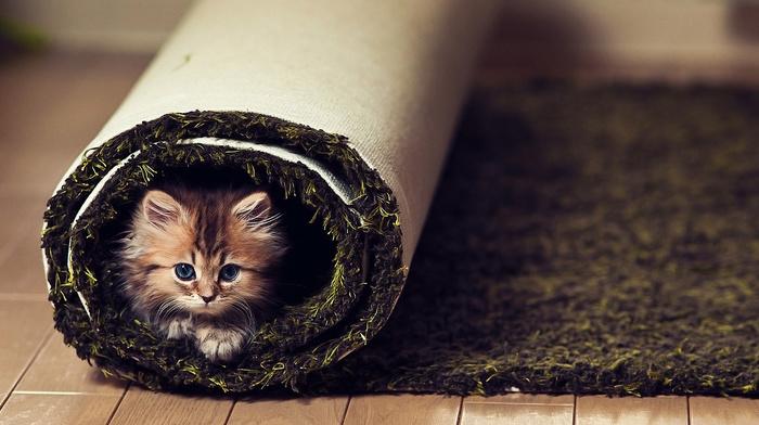 kitten, sight, animals