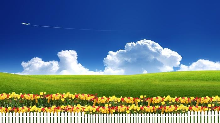 sky, flowers, grass, tulips, grassland, 3D, nature, fence