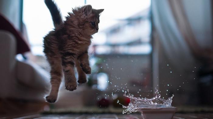 kitten, animals, water