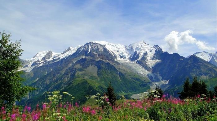 nature, grassland, snow, grass, flowers, mountain
