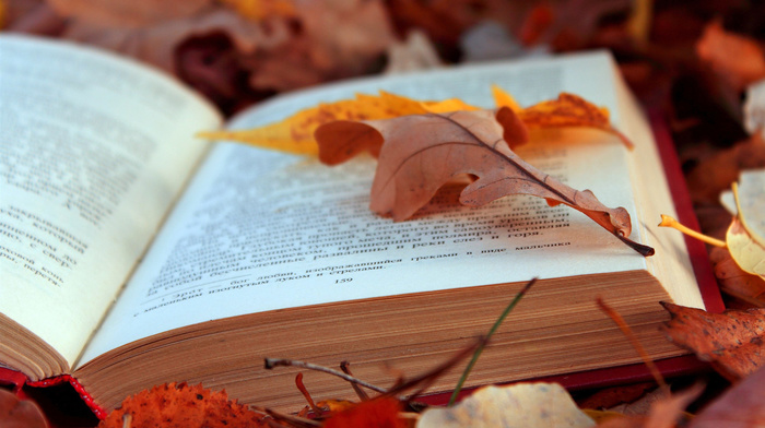 book, foliage, stunner, leaves, text, autumn