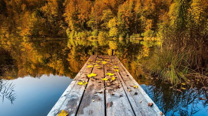 bridge, leaves, lake, autumn, nature