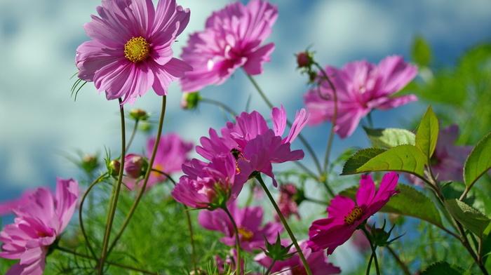 flowers, summer, nature, beauty