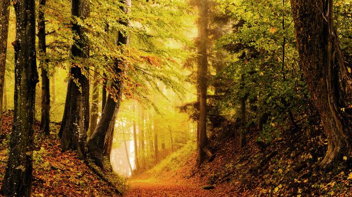 autumn, foliage, forest, nature