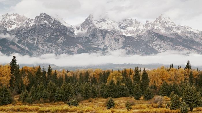 туман, серое, горы, деревья, природа, лес, небо, облака, осень