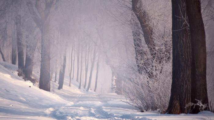 снег, дорога, зима, лес