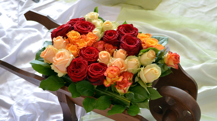 roses, beauty, flowers