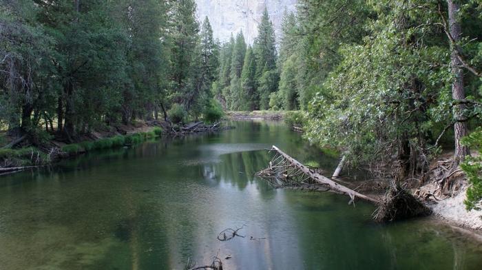 вода, деревья, река, природа
