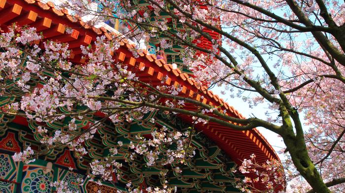 sakura, building, patterns, stunner, tree