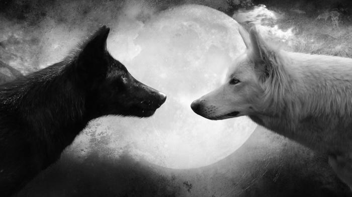 wolf, white, animals, moon, black