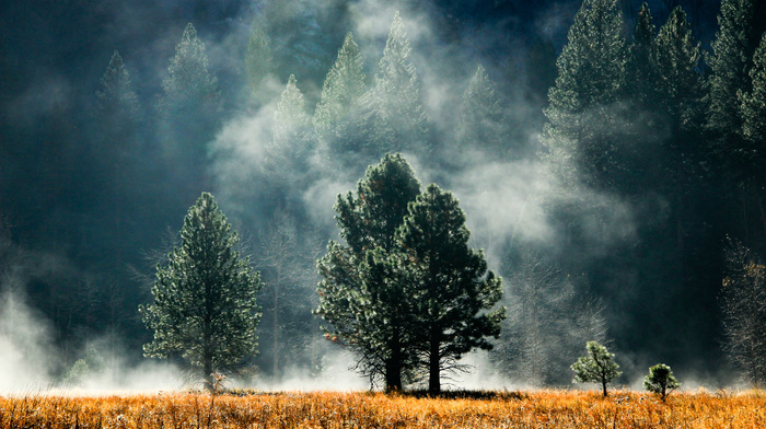 trees, forest, nature, glade