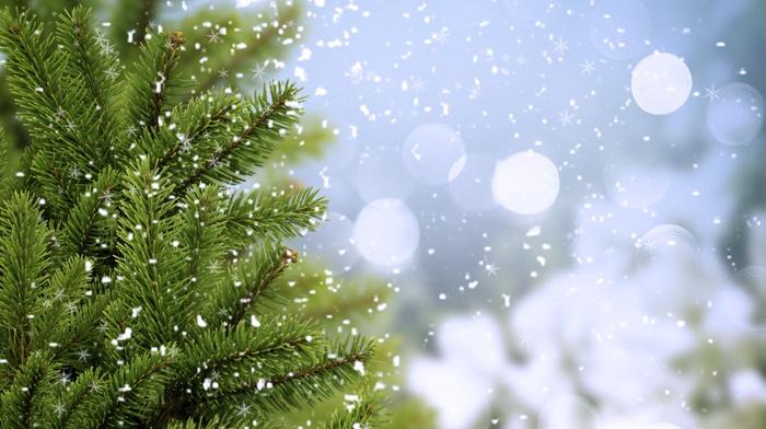 twigs, fir-tree, trees, cold, greenery, winter