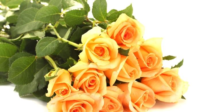 bouquet, petals, leaves, roses, flowers