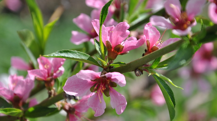 bloom, branch, tree, spring
