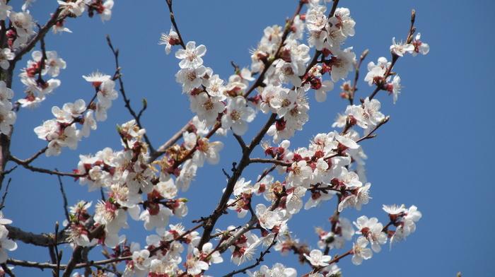 nature, bloom, flowers, tree