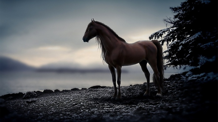 animal, animals, horse, stones, evening