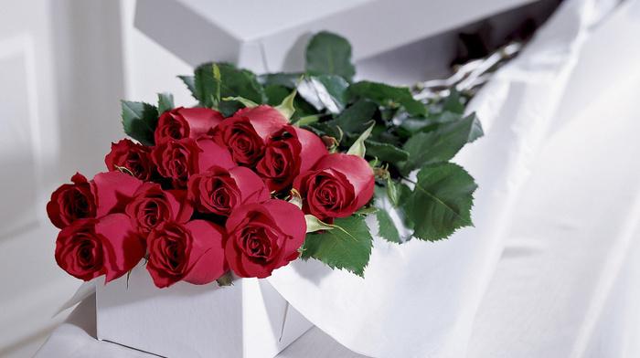 gift, roses, flowers