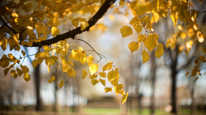 motion blur, leaves, tree, branch, nature, autumn