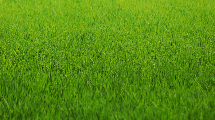 greenery, grass, color, texture