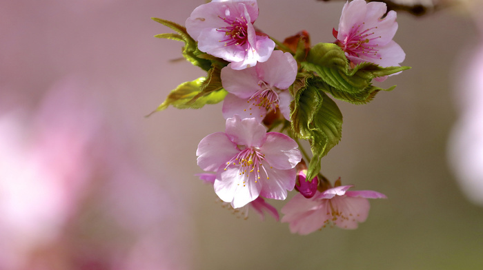 spring, flowers, macro, bloom, branch, tree