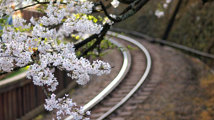 Japan, sakura, flowers, railway, twigs, tree