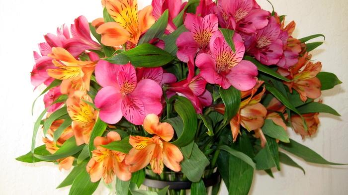 flowers, nature, bouquet, flower
