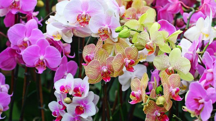 flowers, flower, bouquet