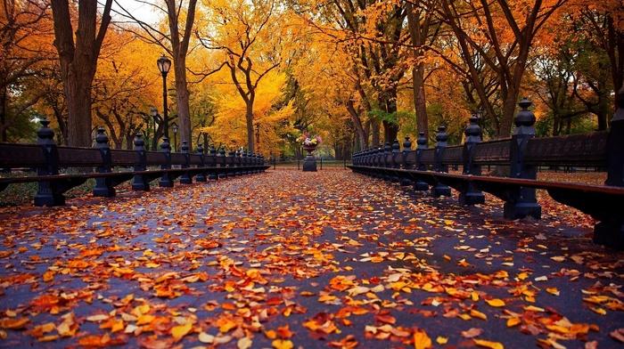 leaves, trees, autumn, park