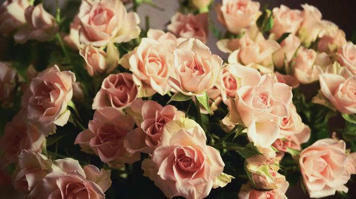bouquet, roses, petals, flowers