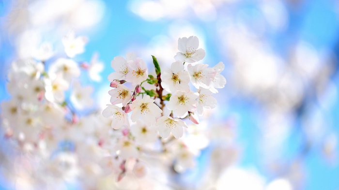 bloom, tree, branch, flowers, spring