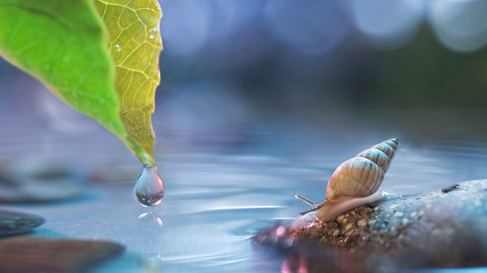 stunner, stone, leaf, highlights, water