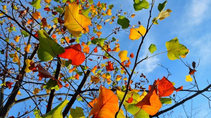 leaves, paints, autumn