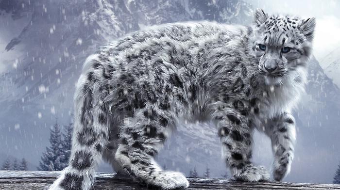 snow, animal, animals