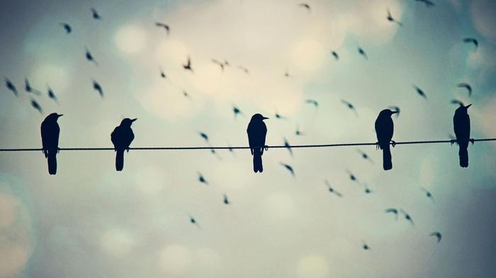 nature, animals, birds