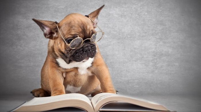 book, animals, dog, glasses