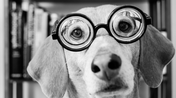 animals, glasses, sight, muzzle, black and white, dog