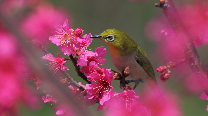 bird, flowers, tree, spring, bloom, animals