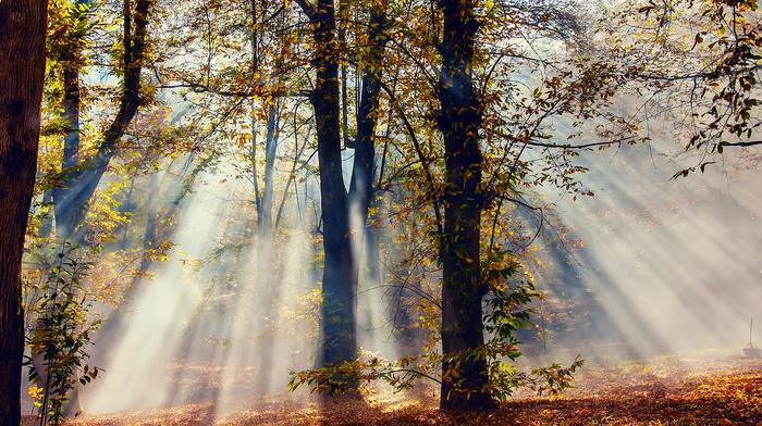 forest, nature, autumn, trees, light, rays, foliage