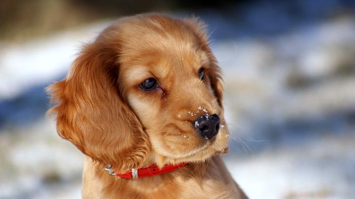 bokeh, animals, snow, sight, puppy