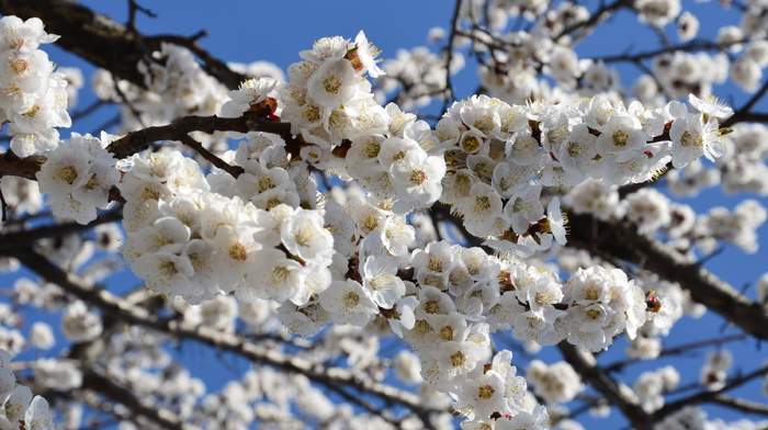 spring, bloom