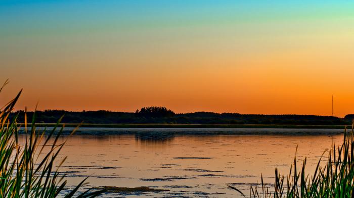 озеро, закат, природа, болото, деревья, трава, вечер