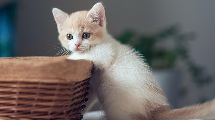 kitten, kid, animals